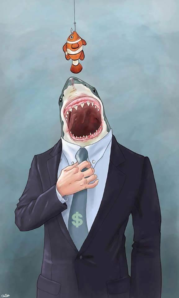 tiburones-politicos